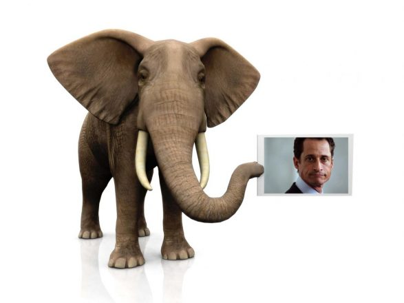 Elephant with sign