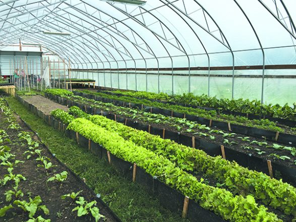 A greenhouse at  Country Roots farm in Riley, where organic produce is grown