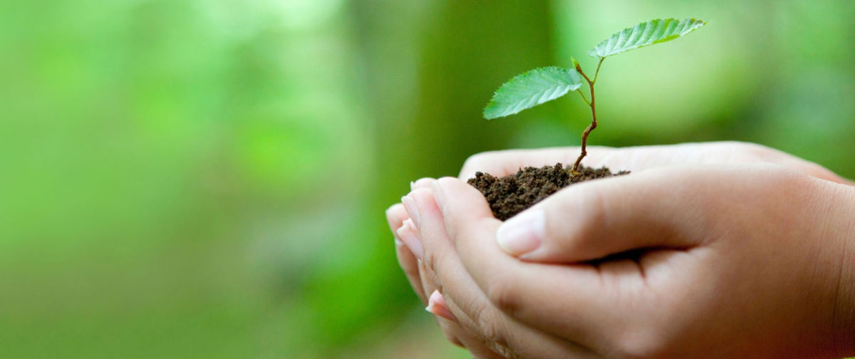 what the world s religions have to say about living green