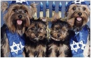 4 dogs dressed in kippahs and talit in front of a menorah