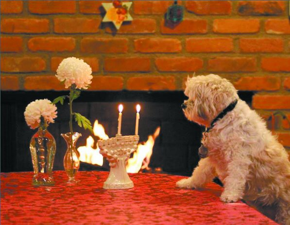 @rebeldoingthingss photo of the dog Rebel lighting Hanukkah candles.