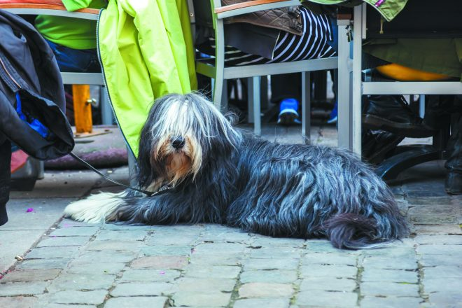 Readers want their dogs to be welcome at restaurant patios.