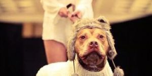 Thinking Outside The Dog House: Canines And Couture
