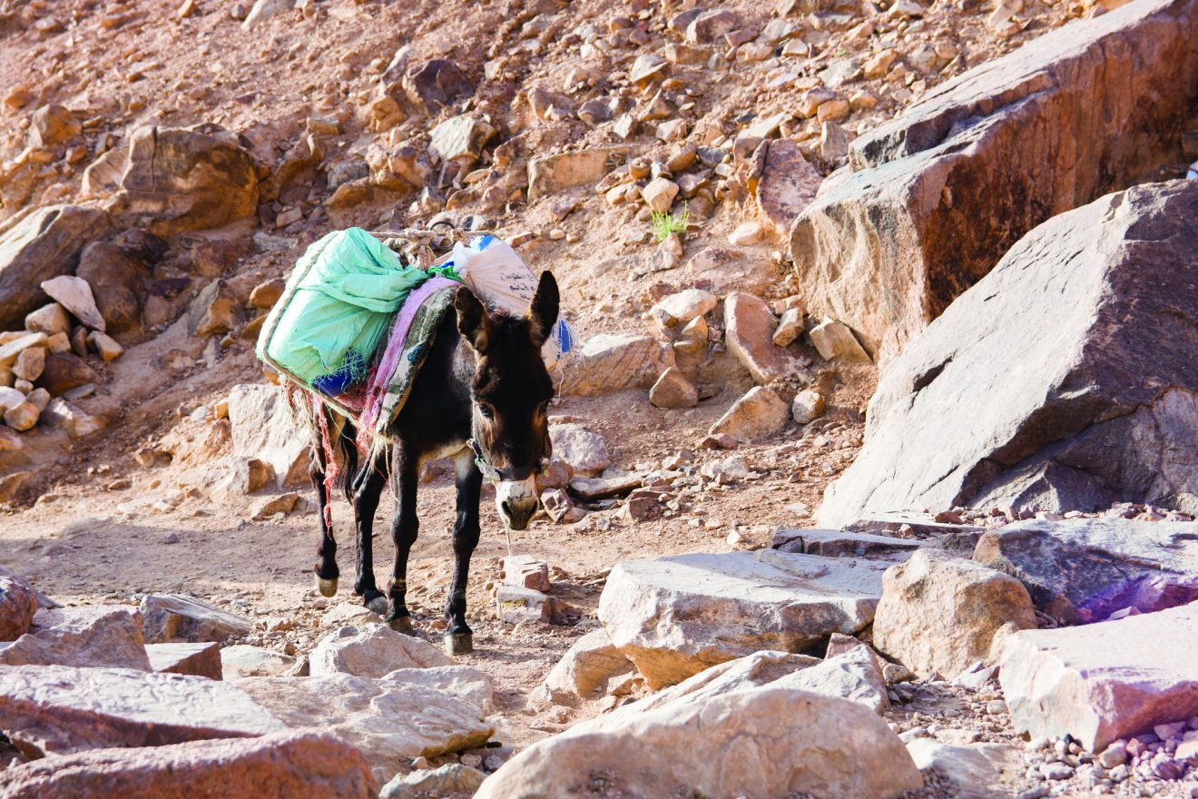 Parshat Balak: Numbers 22:2-25:9; Micah 5:6-6:8. donkey ass going up to mount sinai.