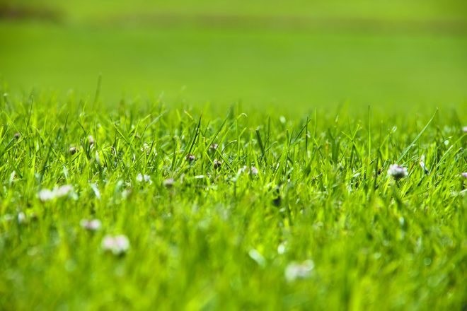 If you're willing to tolerate some clover, organic lawncare might be a good choice.