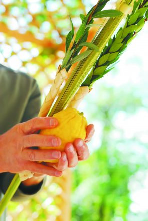 A man's hands holding the Lulav and Etrog, symbols of the Jewish festival of Succot.