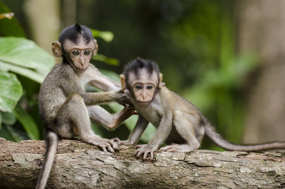 two baby apes in honor of World Great Ape Day September 8