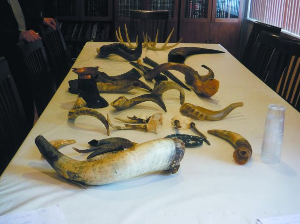 Kaplan has more than 50 shofars, plus some antlers and animal hooves.