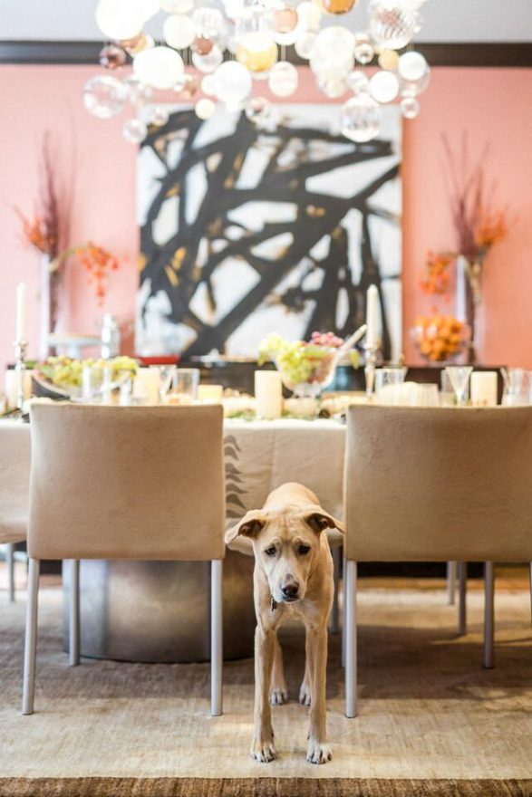 Family dog Daisy, a rescue from the Grand Traverse Humane Society — an unintentional match to the dining room chairs.. The dog stands in between the chairs.