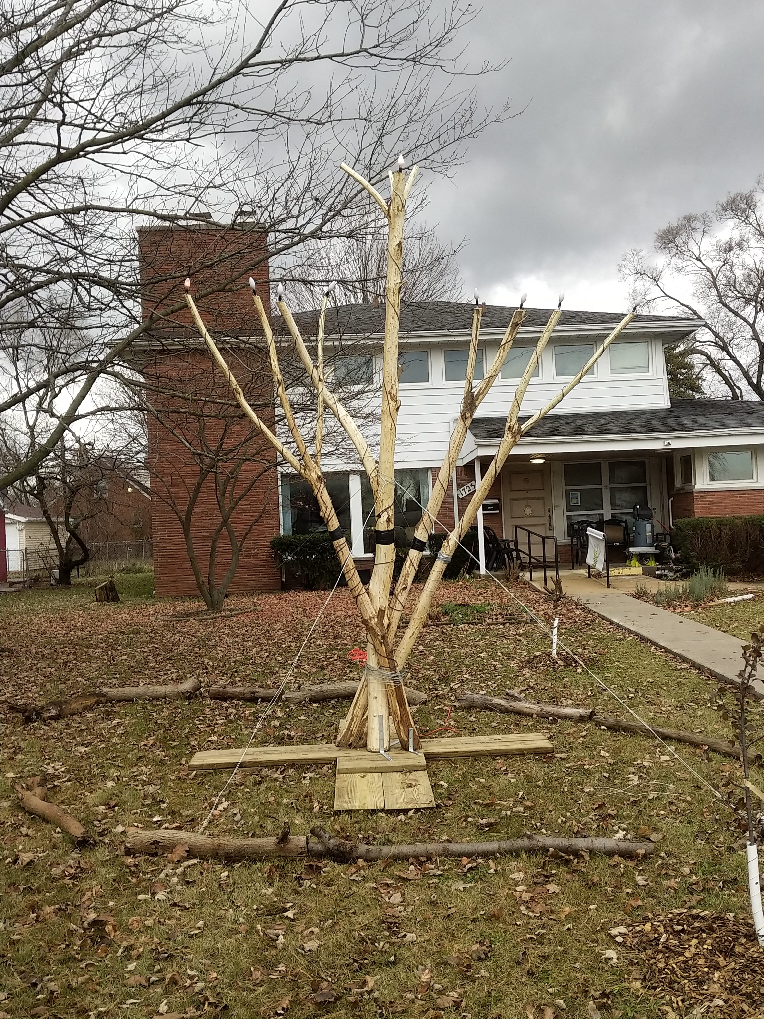 The new public menorah at Jewish Ferndale is made of catalpa branches.