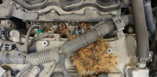 rodent causes car trouble