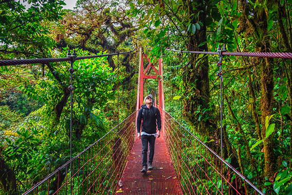 Tourist walking on a hanging suspension bridge in the jungle of Monteverde Cloud Forest, Costa Rica.